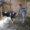 Школьница из Коми открыла собственную ферму