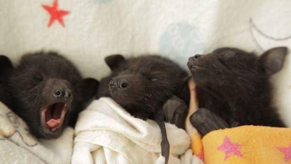 новорожденные-летучие-мыши