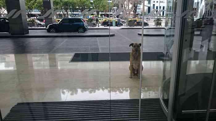 Стюардесса принимает пса, который ждал её шесть месяцев у входа в отель
